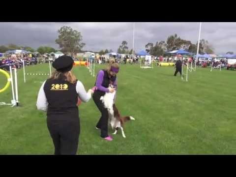 AG CH Kayladene Born To Run (Nakita) Winning Top Dog Jumping 2013