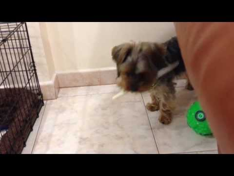 DOG RUNNING WITH A KNIFE