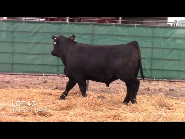 Taliaferro Angus \u0026 T Bar T Angus Ranch - 43