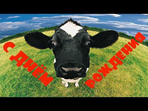 ОЧЕНЬ ОРИГИНАЛЬНОЕ ПОЗДРАВЛЕНИЕ С ДНЁМ РОЖДЕНИЯ!!! КОРОВЫ ЗАЖИГАЮТ (видео)!!! Поёт Сергей Рыбачёв