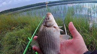 Рыбалка в июле. Ловля КАРАСЯ на поплавок (Часть 1)