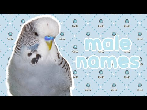 Male Names For Your Parrot 😇😊
