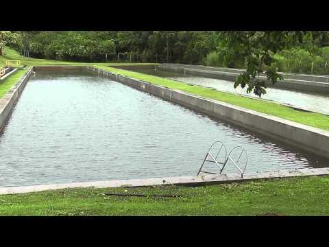 Invierte en piscicultura doovi for Como oxigenar el agua de un estanque sin electricidad