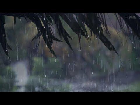 gentle-rain-on-coconut-roof-|-rain-drops-sound-for-relaxation-&-sleep