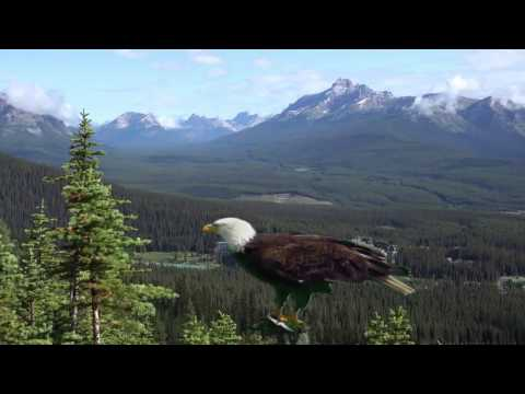 FLY LIKE AN EAGLE   Native American Song
