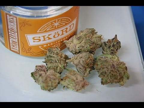 Skord Marijuana Review Tacoma | Green Collar Cannabis
