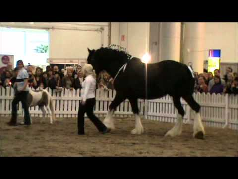 Helsinki Horse Fair 2011