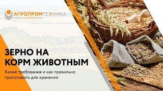 Правила подготовки зерна на корм для животных