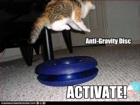 Gravity Cat Not Amused Remix YouTube