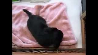 Cute Animals Doing Cute Things Slightly Fat Miniature Dachshund Funny Animal