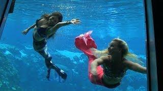 Popular Videos - Weeki Wachee