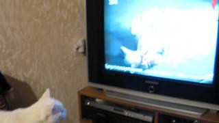 Кот смотрит передачу о животных.CAT.Улыбнитесь с нами!