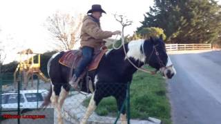 COOPER RASCAL ETALON PAINT HORSE HOMOZYGOTE A VENDRE
