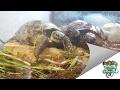 Reptile Store Tour - The vivarium