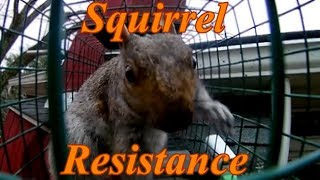 How to Dramatically Caтch Squirrels in a Live Trap