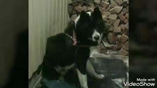 Собака пропала и не вернулась. Памятное видео.