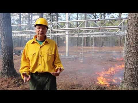 New Jersey Forest Fire Service - Science in Action YEAR 2