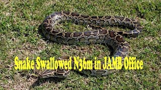 Snake Swallowed N36m in JAMB Office by G-one Youtube