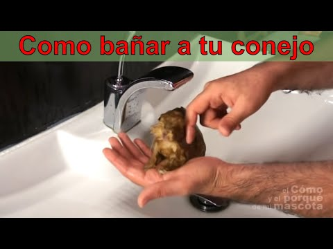 CONEJOS - Baño con agua (with subtitles)