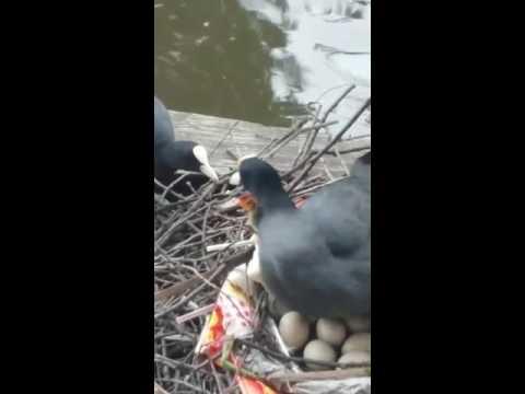 Urban wildlife on amsterdam canal 😀