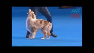 FCI Dog dance World Championship 2016 –Heelwork to music final– Uta Opel with Dexter (Germany)