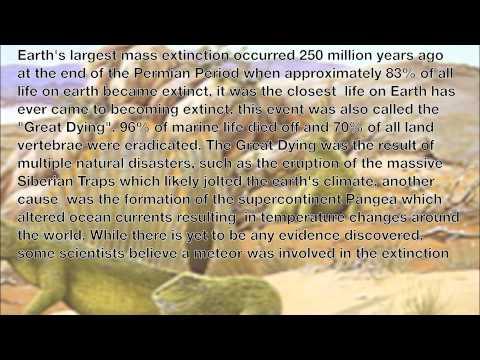 Mass Extinctions Timeline