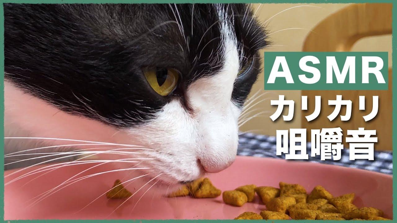 🍙👅ASMR|どアップでカリカリ食べてる猫を見る【咀嚼音】#176