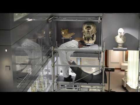 Moving large animal skulls at the Hunterian Museum