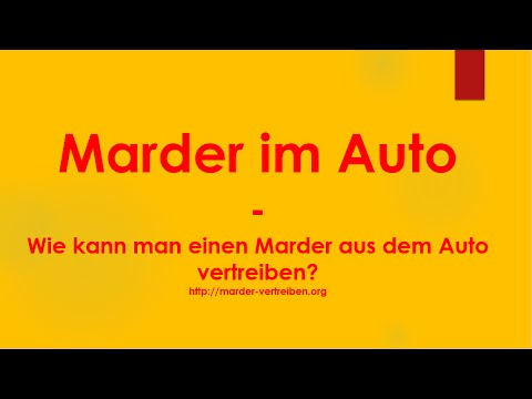 marder im auto wie kann ich einen marder aus dem auto vertreiben youtube. Black Bedroom Furniture Sets. Home Design Ideas