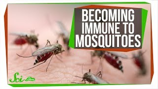The Secret to Becoming Immune to Mosquito Bites thumbnail