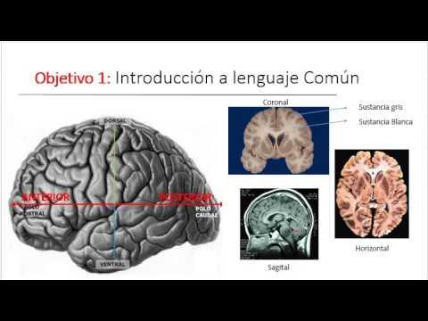 ALUMNOS Neurofisiologia @FacultadPsi_UNC: Resumen De Clase Corteza