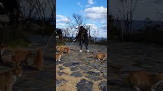 울릉도 코스모스 리조트 고양이