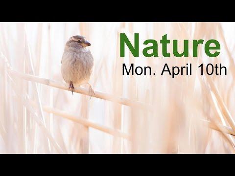 T&C LIVE: Nature!