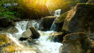 Nature Sounds - Live 24/7   Tropical Rainforest with Summer Stream   Water Sound Nature Meditation