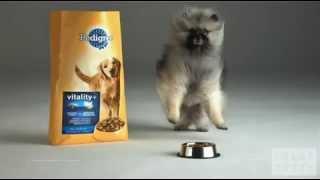 Красивая реклама собачьего корма(Pedigree Dogs)