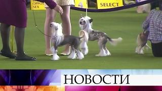 ВНью-Йорк напрестижную выставку собак съехались тысячи гостей иконкурсантов.