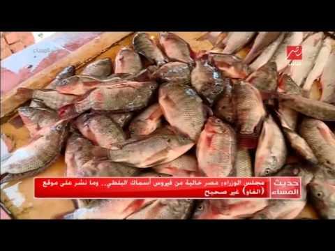 مجلس الوزراء: يؤكد مصر خالية من فيروس أسماك البلطي