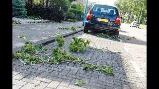 Gevaarlijke situatie door harde wind in park Lepelaarplantsoen in Maassluis