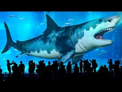 地球上に存在した最大のサメ10