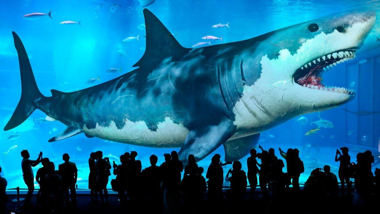 地球上に存在した最大のサメ10 -...