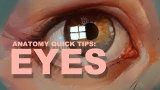 Anatomy Quick Tips: Eyes