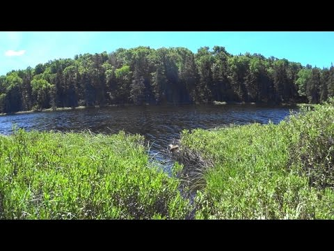 Bushwhack from Upper Beech Ridge Pond to Bear Pond in the Five Ponds Wilderness