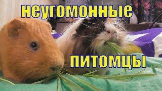 Неугомонные питомцы /Сезон пророщенного овса наступил