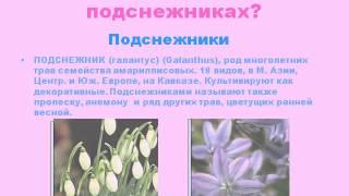 Презентация Почему подснежники занесли в Красную книгу растений