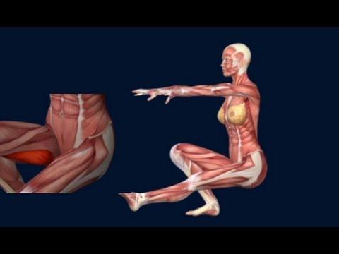 One Leg Squat Pistol Squat Anatomy Animation Progression ...