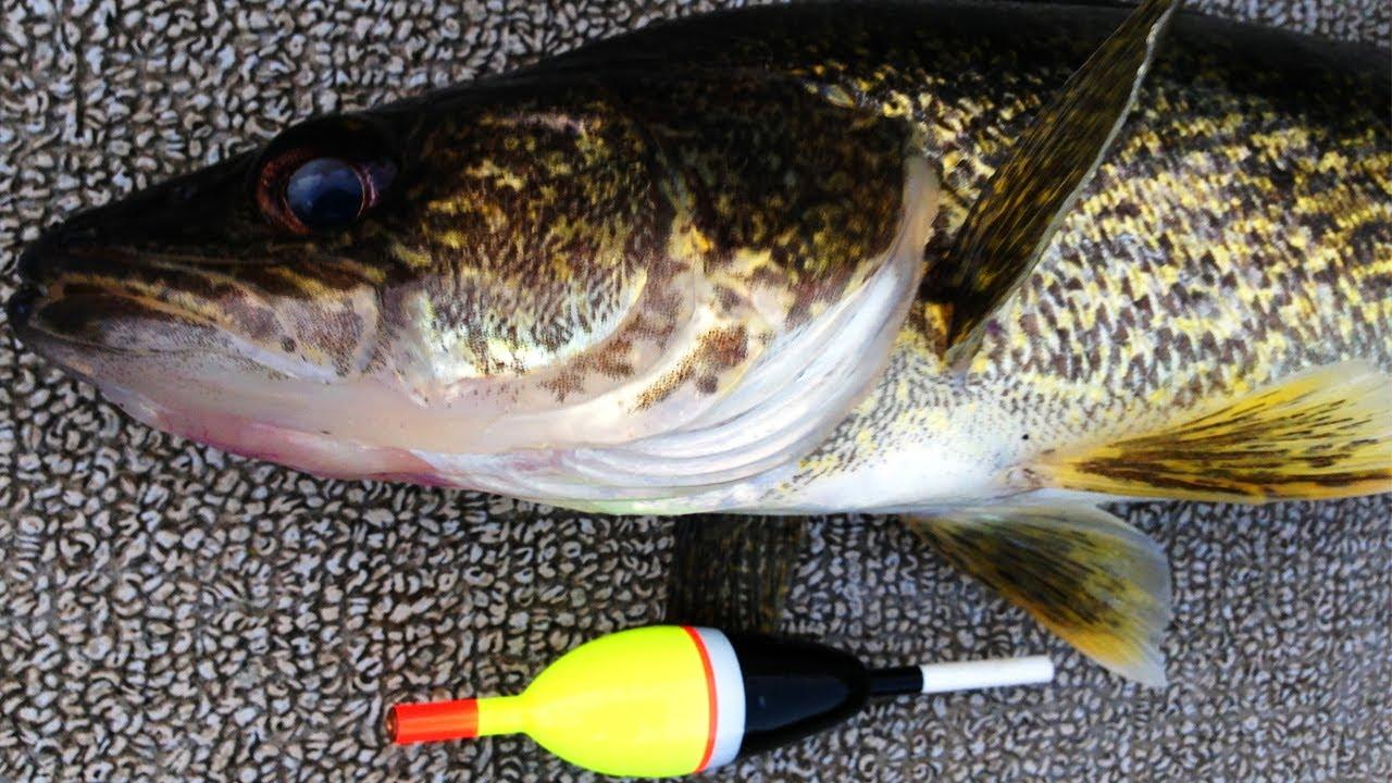live bait walleye fishing - youtube, Fishing Bait