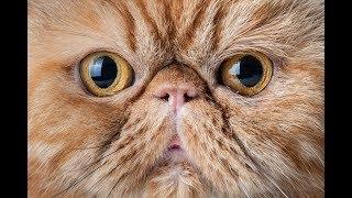 КОТЫ 2019 Смешные коты приколы про котов до слез – Смешные кошки – Funny Cats 2019 #EP03