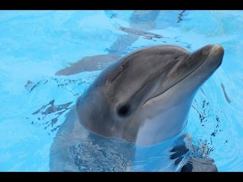 видео: Как рождается дельфин?