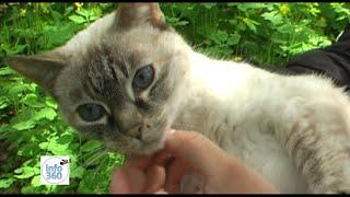 Волонтеры Киева создали приют для животных. Стерилизация. Мини ветклиника.
