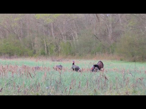 Crazy Opening Week In Tennessee - 2017